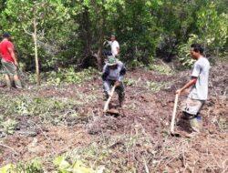 Satgas TMMD dan Masyarakat Tanam Mangrove