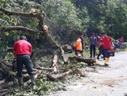Pohon Tumbang, Jalan Agam -Bukittinggi Terganggu