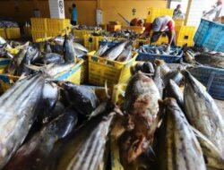 Ekspor Ikan Sumbar tak Terpengaruh Kebijakan Penghentian Impor China
