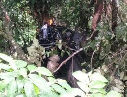 Kecelakaan Beruntun di Sitinjau Lawik, Dua Mobil Masuk Jurang