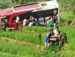 Penyebab Bus Pastra Masuk Sawah Diduga Karena Sopir Mengantuk